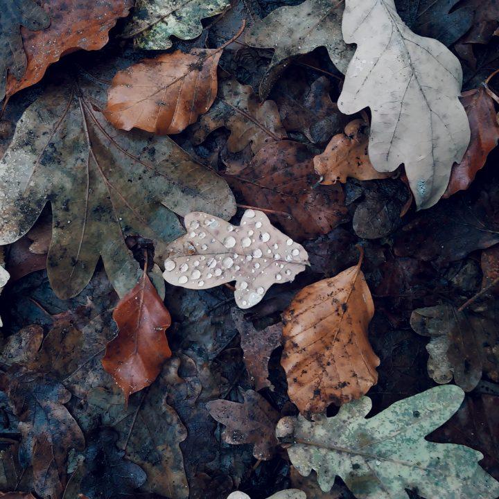 Jesienią patrz pod nogi